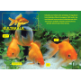 Lasten eläinkirja - Kalat