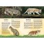 Nisäkkäät : Kissaeläimet